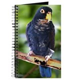 Bronze wing pionus Journals & Spiral Notebooks