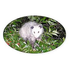 Opossum Cherry Tree Decal