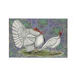 White Holland Turkeys Rectangle Magnet (100 pack)