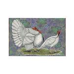 White Holland Turkeys Rectangle Magnet (10 pack)