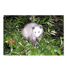 Opossum Cherry Tree Postcards (Package of 8)