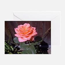 Peach Rose Greeting Cards (Pk of 10)
