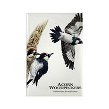 Acorn Woodpeckers Rectangle Magnet