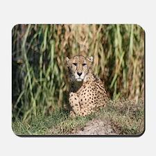 Mousepad-Cheetah