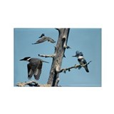 Kingfisher magnet Magnets