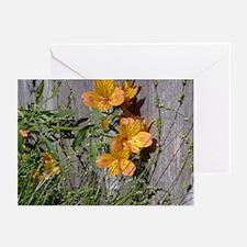 Spring Bloom Greeting Cards (Pk of 10)