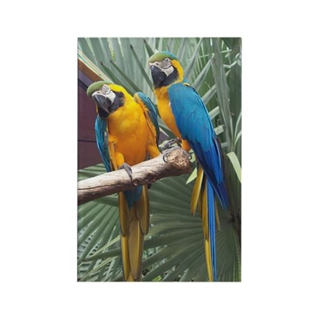 Blue & Gold Macaws Rectangle Magnet