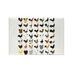 49 Roosters Rectangle Magnet (100 pack)