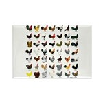 49 Roosters Rectangle Magnet