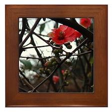 Early Spring in Sonoma framed tile