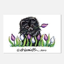 Black Pomeranian Tulips Postcards (Package of 8)