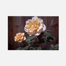 Peach Roses Rectangle Magnet
