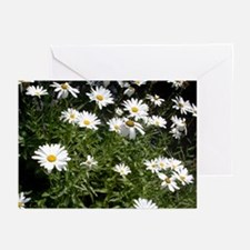 Cheerful Daisies Greeting Cards (Pk of 10)