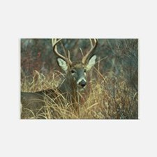 Cute Deer Rectangle Magnet (100 pack)