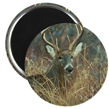 deer1001 Magnets