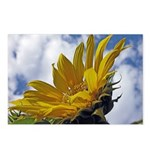 Sunflowers and Sky Postcards (Package of 8)