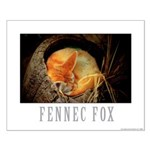 Fennec Fox Small Poster