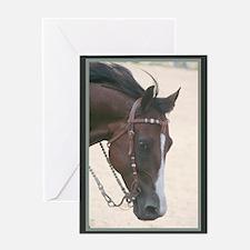 Bay Western Horse Greeting Card