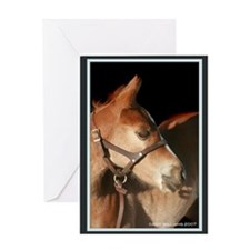 Quarter Horse Foal Greeting Card