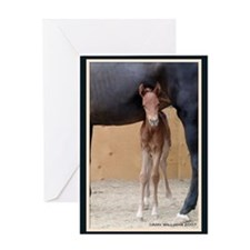 Baby Horse Greeting Card