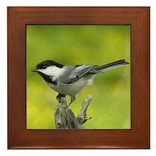 Bird Photo Framed Tile