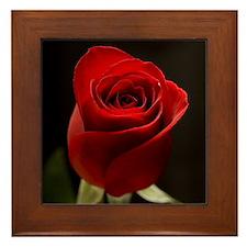 Red Rose Flower Photo Framed Tile