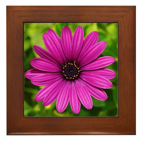 Violet Daisy Flower Photo Framed Tile