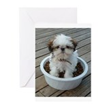 Shihtzu Greeting Cards (10 Pack)