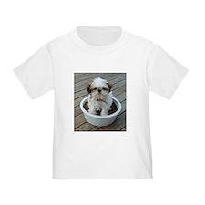 Shih Tzu Puppy T