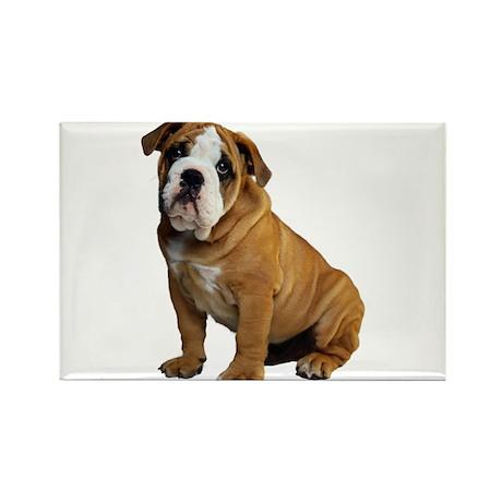 English Bulldog Rectangle Magnet (100 pack)