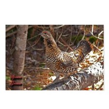 Female Spruce Grouse 2 Postcards (Package of 8)