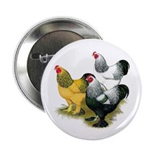 "Brahma Rooster Assortment 2.25"" Button (100 p"