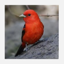 Scarlet Tanager Bird Photo Tile Coaster