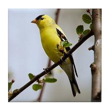 American Goldfinch Bird Photo Tile Coaster