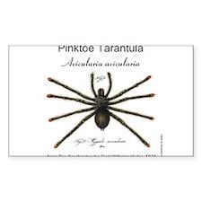 Pinktoe Tarantula Decal