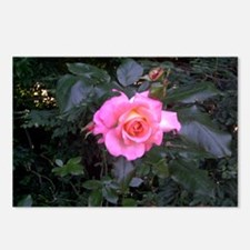 Rose in the Redwoods Postcards (Package of 8)