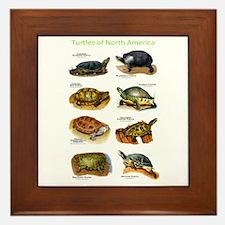 Turtles of North America Framed Tile