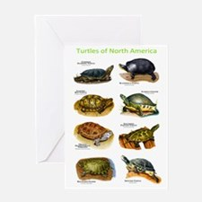 Turtles of North America Greeting Card