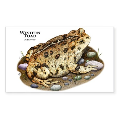 Western Toad Sticker (Rectangle)