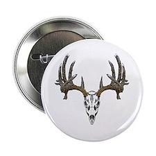 """Whitetail deer skull 2.25"""" Button"""