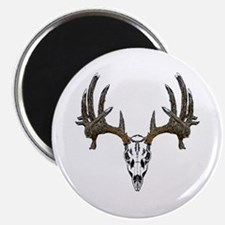Whitetail deer skull Magnet