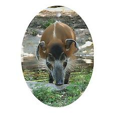Ornament-Hog
