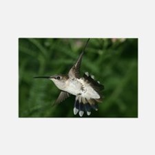 Hummingbirds Rectangle Magnet (10 pack)