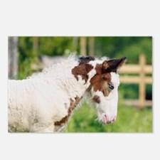 Tinker horse Postcards (Package of 8)