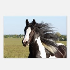 Unique Tinker horse Postcards (Package of 8)