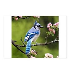 Bird Photo Postcards (Package of 8)