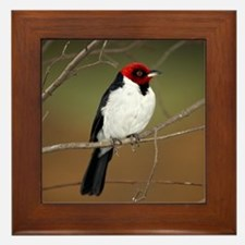 Red-Capped Cardinal Bird Photo Framed Tile