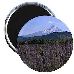 Mount Hood and Lavender Magnet