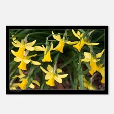 A Host of Daffodils Postcards (Package of 8)