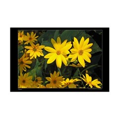 Yellow Daisies Posters